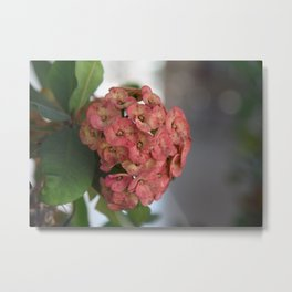 Delicate Pink Blossoms Metal Print