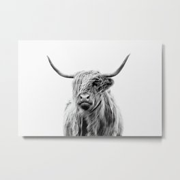 portrait of a highland cattle Metal Print