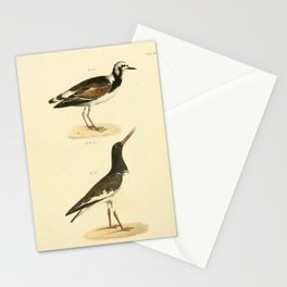 080 Turnstone (Strepsilas interpres) Mantled Oyster catcher (Hasmatopus palliatus)13 Stationery Cards