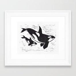 Lino cut Orca and calf  Framed Art Print