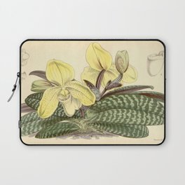 Paphiopedilum concolor Laptop Sleeve