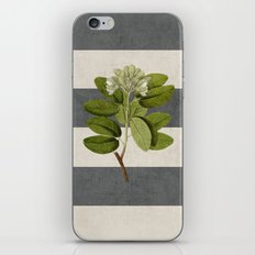 botanical stripes 5 -gray iPhone Skin
