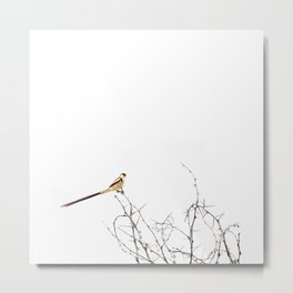 Artistic Minimal Minimal Bright Longtail Bird on Tree Branch Metal Print