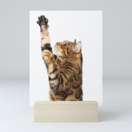 Bengal Cat Standing & Reaching Mini Art Print