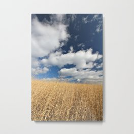 Golden Grass under a dramatic, cloudy sky Metal Print