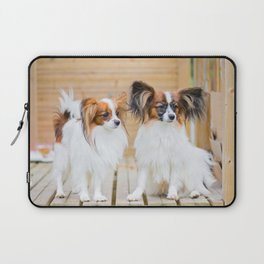Outdoor portrait of a papillon purebreed dogs Laptop Sleeve