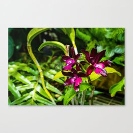 dark purple orchids Canvas Print