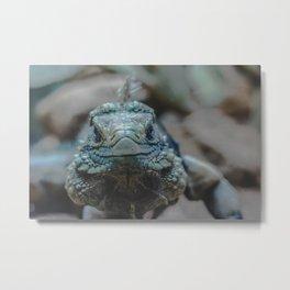 Lizard Metal Print