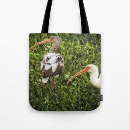 White Ibis - Adult and Juvenile Tote Bag