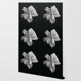 Hibiscus Drama - Black and Grey Wallpaper