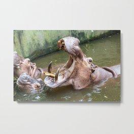 hippopotamus in the water Metal Print