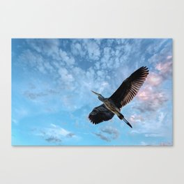 Great Blue Heron Soaring Canvas Print