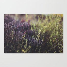 Native Australian Bush Canvas Print
