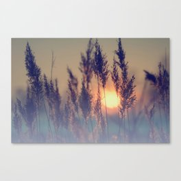 Winter sun in the reed Canvas Print