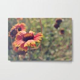 Gaillardia flower Metal Print