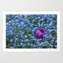 Pink Tulip in the blue by nathaliephotos