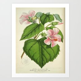Vintage Botanical Floral Flower Plant Scientific Art Print