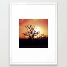 Griffith Tree Framed Art Print
