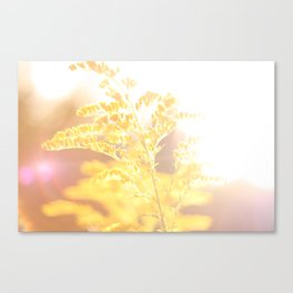 Golden Rod Canvas Print