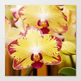 Close up Orchid #8 Canvas Print