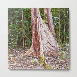 Buttress root in the rainforest Metal Print