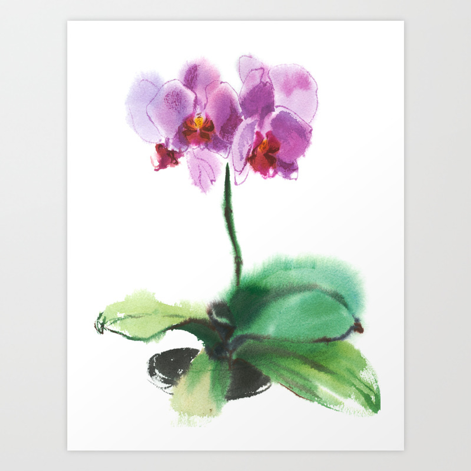 Orchid Phalaenopsis Watercolor Sketch From Nature Art Print By Avamnenado Society6