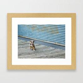 Escapee  Framed Art Print