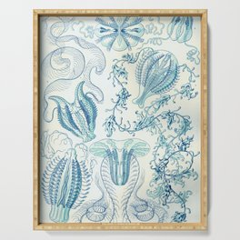 Ernst Haeckel Ctenophorae Plate 27 Serving Tray