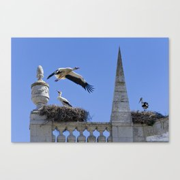 Faro storks Canvas Print