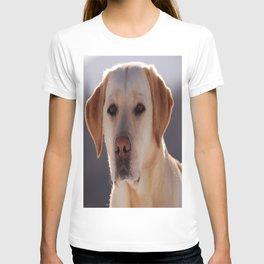 Portrait of A Golden Labrador Retriever T-shirt