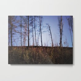 The Trees / Landscape Photography Metal Print