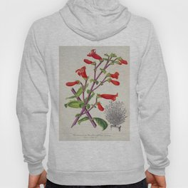 Penstemon Baccharifolius Vintage Botanical Floral Flower Plant Scientific Hoody