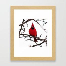 Mr Cardinal in winter Framed Art Print