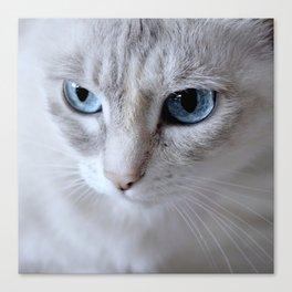 Cat Blue Eyes Canvas Print