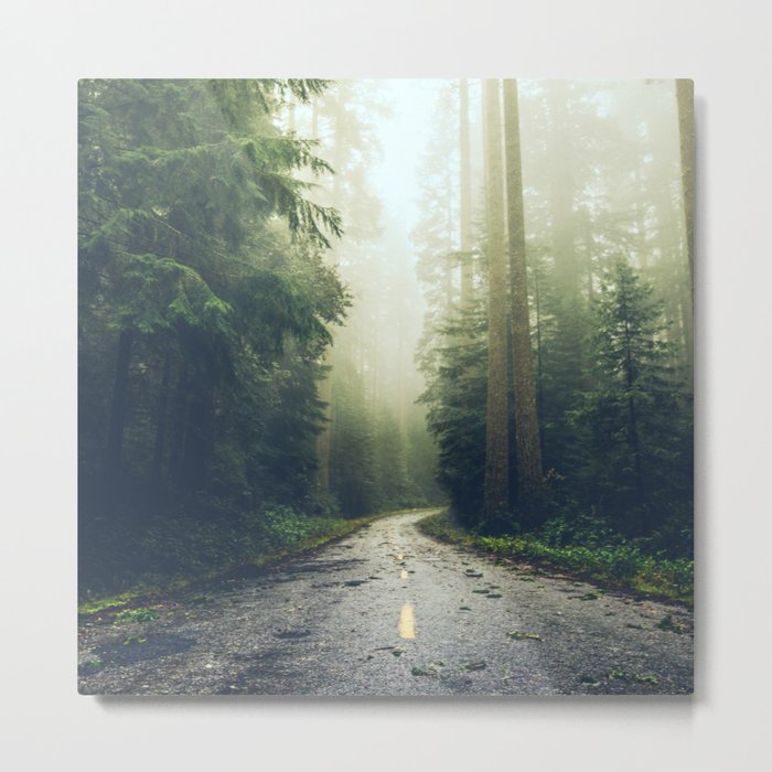 Redwood Forest Adventure - Nature Photography Metal Print