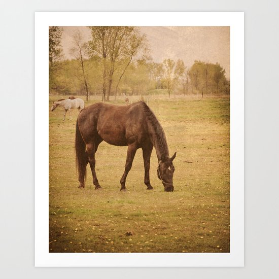 Horse Photograph. Wisconsin Landscape and Nature. Horse Grazing.   Art Print