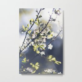 Backlight Blooms Metal Print
