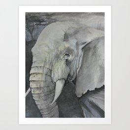 Study of an Elephant Art Print