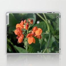 bright orange bean flowers. garden vegetable plant photography. Laptop & iPad Skin