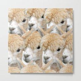 Alpaca Herd Metal Print