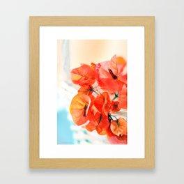 Sunny Bougainville Framed Art Print