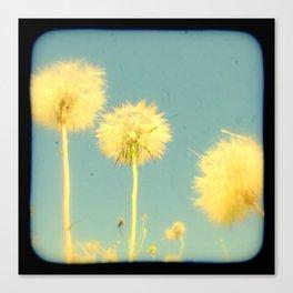 Summer Dandelions #2 Canvas Print