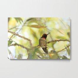 Sweet Hummingbird - Photography Metal Print