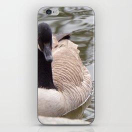 Beautiful Canadian Goose Swimming On Peaceful Pond iPhone Skin