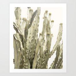 Cactus 3 Art Print