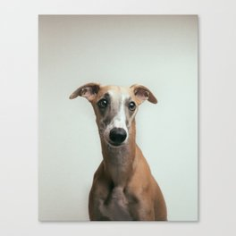 Careful whippet Canvas Print