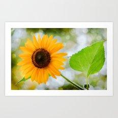 Shinny  Sunflower Art Print