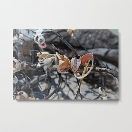 Dare to Touch Metal Print