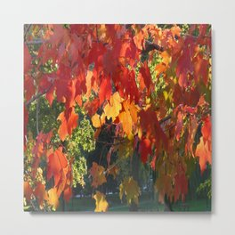 Autumn Fall Foliage Metal Print