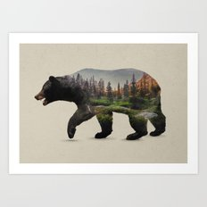 The North American Black Bear Art Print